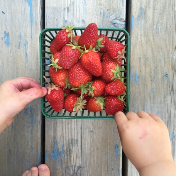 We ate tons of fresh local delicious fruit. We even picked our own strawberries!